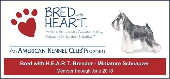 Member of the American Kennel Club H.E.A.R.T. Breeder Program
